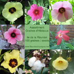 Assortiment Graines Hibiscus - Lot de 50 graines