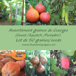 Assortiment Graines de Courges - lot de 50 Graines