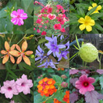 Graines de Plantes tropicales faciles - Assortiment de 100 graines