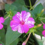 Fleur Des Tropiques Graines De Plantes Tropicales Epices Broderie