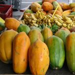 Carica papaya / Papaye - var. 'Colombo' - lot de 20 graines