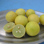Citrus aurantifolia / Lime / Citron Galet - lot de 10 graines