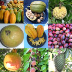 Graines Arbres Fruitiers - Assortiment de 100 graines