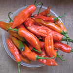 Capsicum sp / Piment Achard - lot de 20 graines