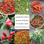 Graines de Piment - Assortiment de 100 graines
